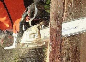 Rüsselsheim: Holzerwerb noch bis 15. März möglich